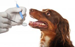 معاینه دندان های گربه