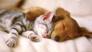 دوستی گربه و سگ