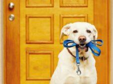راهنمای خرید قلاده سگ | چه قلادهای برای سگ من مناسبتر است؟