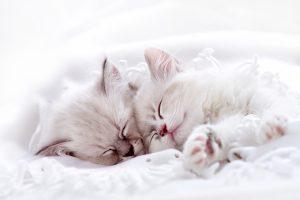 بچه گربه های سفید