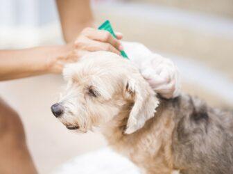 انواع بیماریهای انگلی در سگها+راههای پیشگیری و درمان