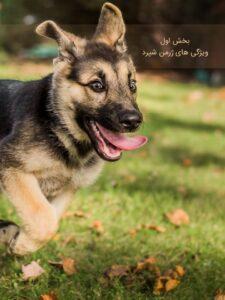کتاب تربیت سگ ژرمن