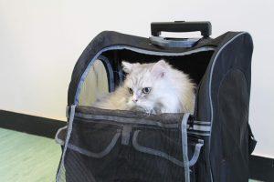 باکس حمل توری گربه