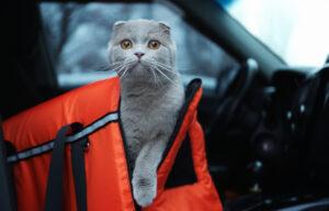 ساک حمل گربه