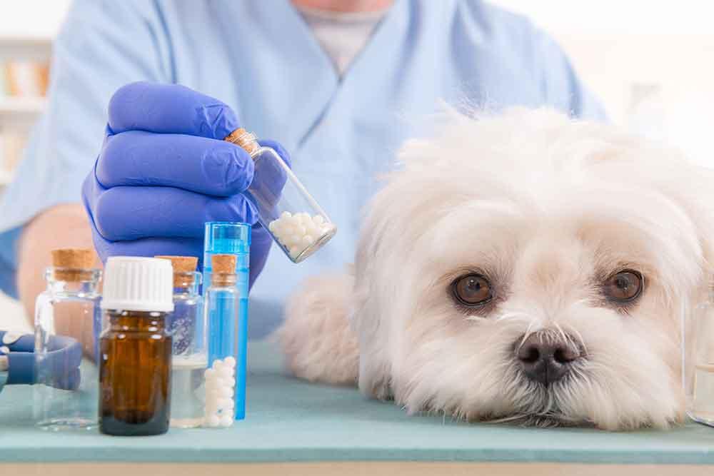 داروهای سگ