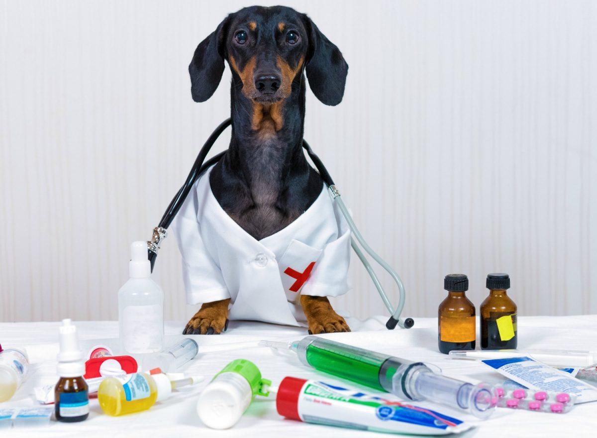دکتر شدن سگ