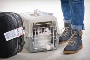 باکس راحت برای حمل گربه