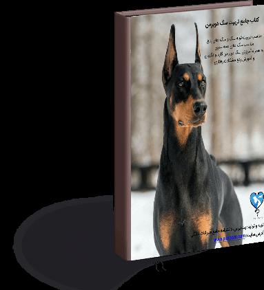 تربیت سگ دوبرمن ، از تولگی تا بعد از بلوغ