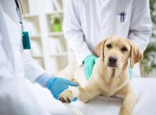 همه چیز در مورد شایعترین بیماریهای سگ + علائم، پیشگیری و درمان