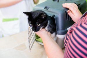 باکس پلاستیکی گربه