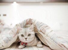 راهنمای انتخاب و خرید باکس و جای خواب گربه