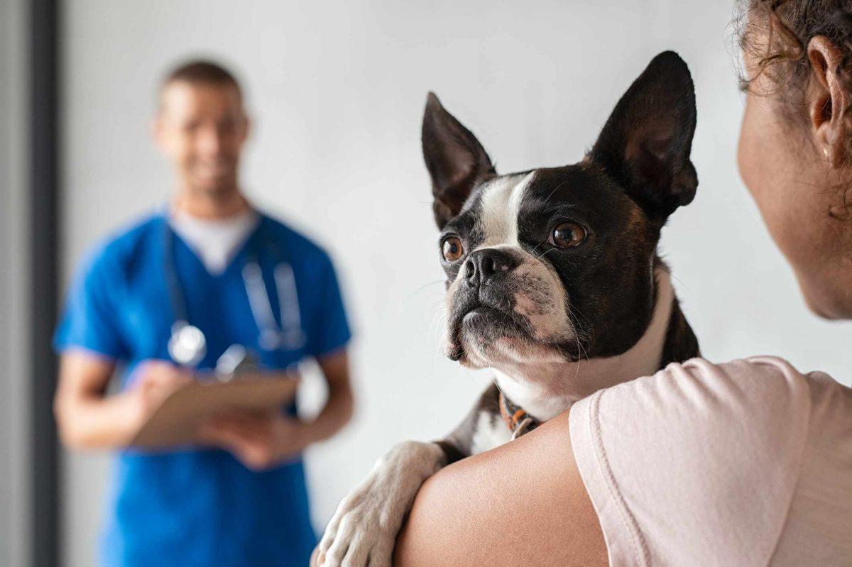 بردن سگ به دامپزشکی
