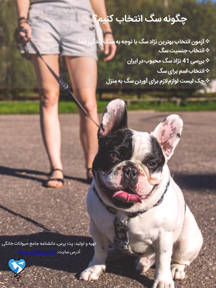 راهنمای کامل و تست انتخاب نژاد سگ