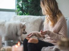 راهنمای انتخاب غذای مناسب برای سگ نژاد اشپیتز
