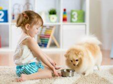 راهنمای انتخاب غذای مناسب برای سگ پامرانین روباهی و خرسی