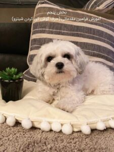 کتاب تربیت سگ شیتزو