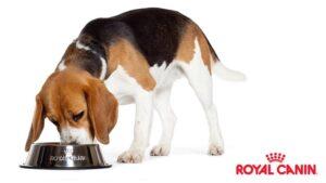 غذاهای سگ رویال کنین