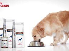 آشنایی با انواع غذای سگ رویال کنین