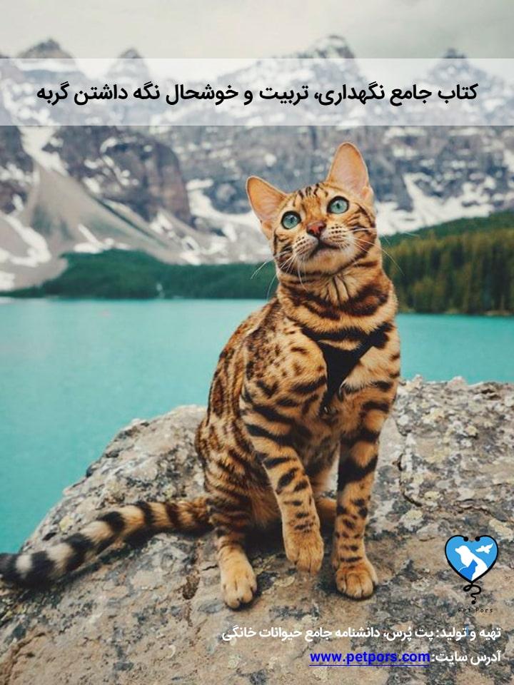 راهنمای کامل نگهداری، آموزش و تربیت گربه به صورت عملی