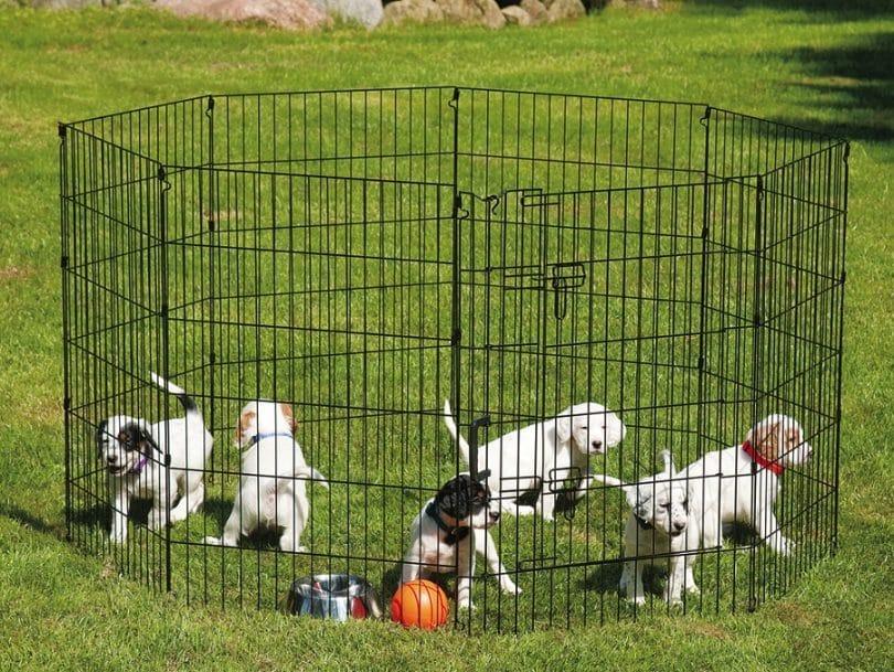 بازی توله سگ ها داخل پارک سگ