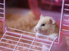همه چیز درباره همستر، حیوان خانگی کوچولو و بامزه!