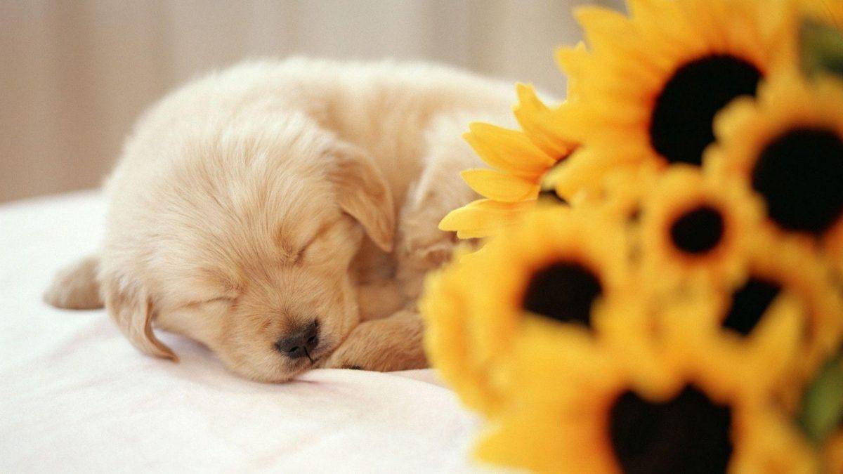خوابیدن توله سگ