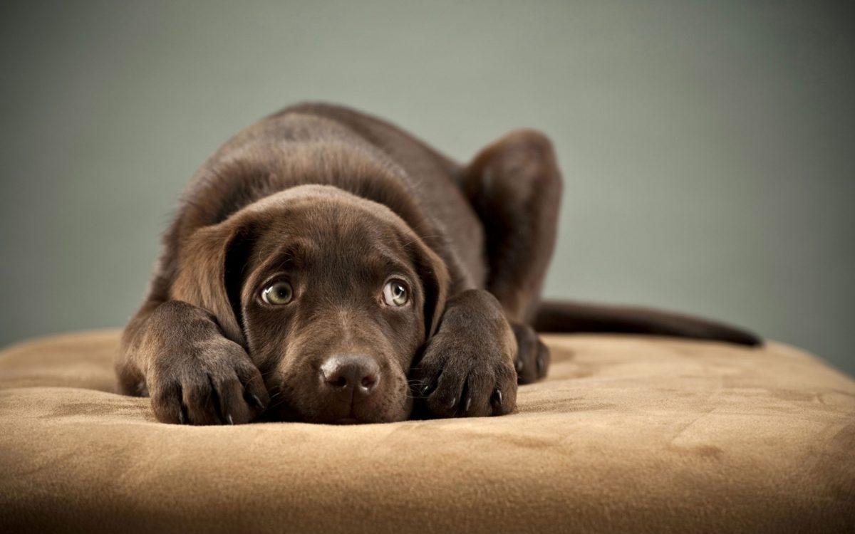 نگاه مظلومانه سگ