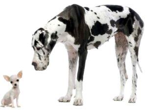 ارتباط سگ شیواوا با بقیه حیوانات