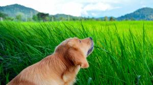 سگ در طبیعت