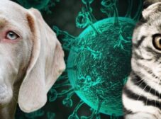 آیا حیوانات خانگی هم کرونا میگیرند؟