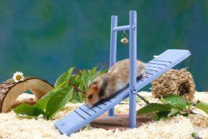 قفس زیبای hamster