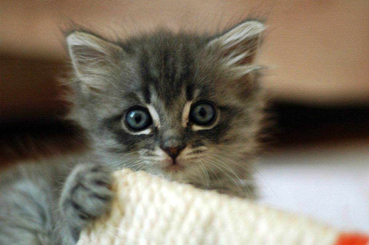 بچه گربه متعجب