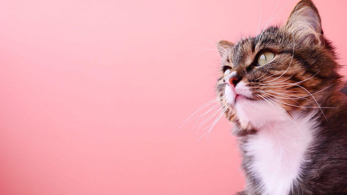 گربه خوشگل