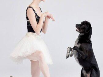 کتاب آموزش رقصیدن به سگ با صاحبش (رایگان)