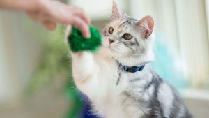 بازی با گربه