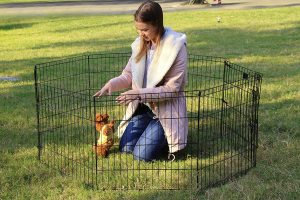 بازی کردن با سگ داخل پارکش