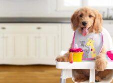 بهترین رژیم غذایی برای توله سگ در حال رشد چیه؟