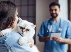 همه چیز در مورد عقیمسازی گربهها
