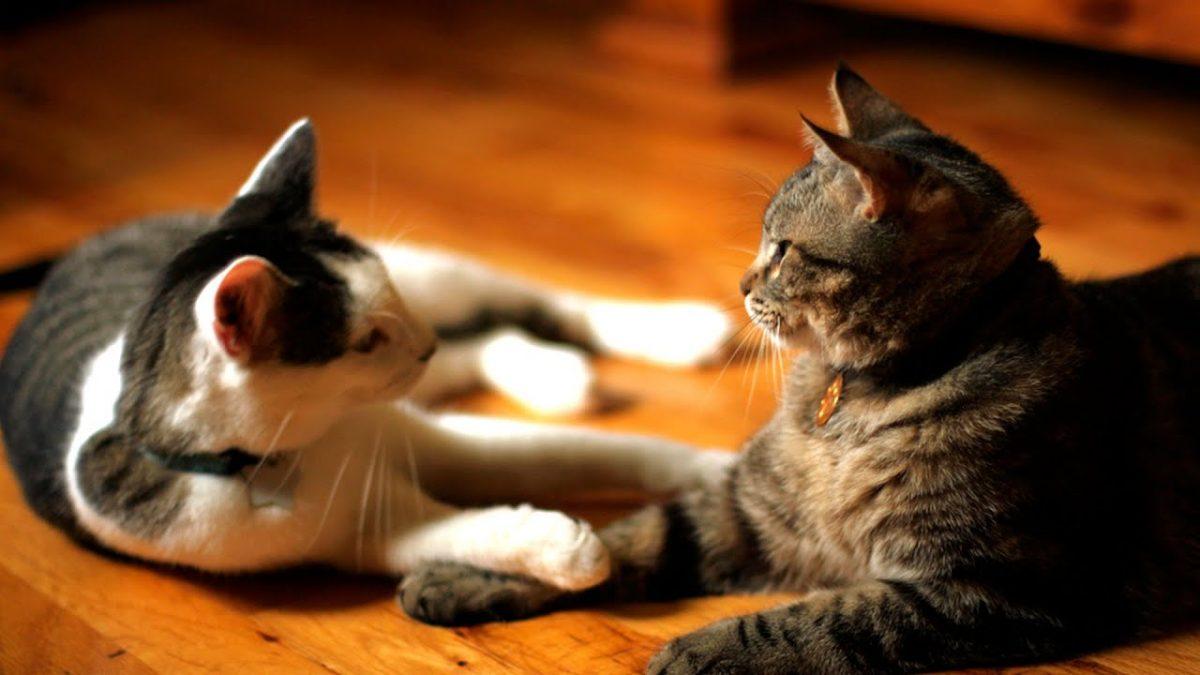 دو گربه در پانسیون گربه