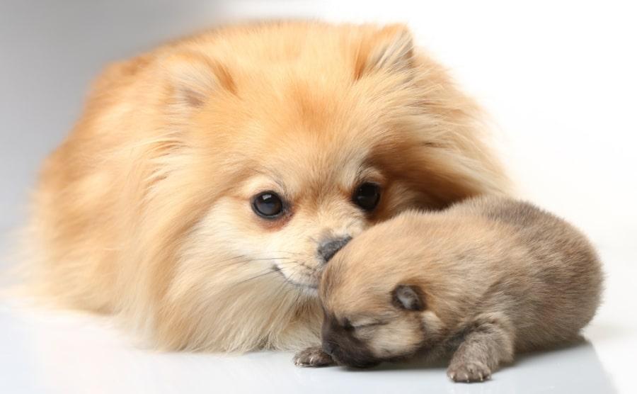 سگ و توله سگ تازه به دنیا آمده