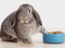 راهنمای غذای خرگوش + انواع یونجه، پلت و سبزیجات مفید!