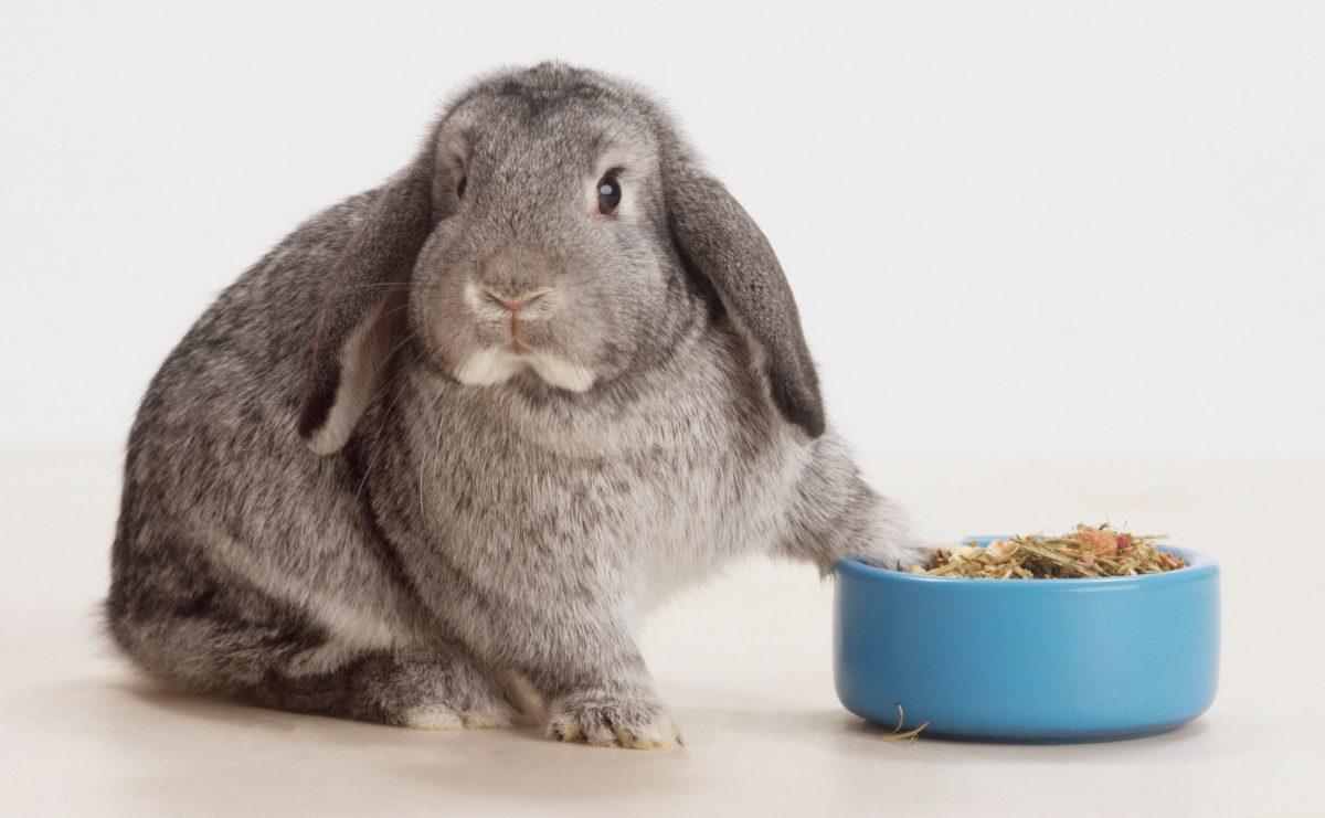 راهنمای غذای خرگوش
