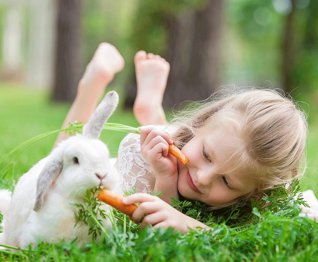 دادن تشویقی هویج به خرگوش
