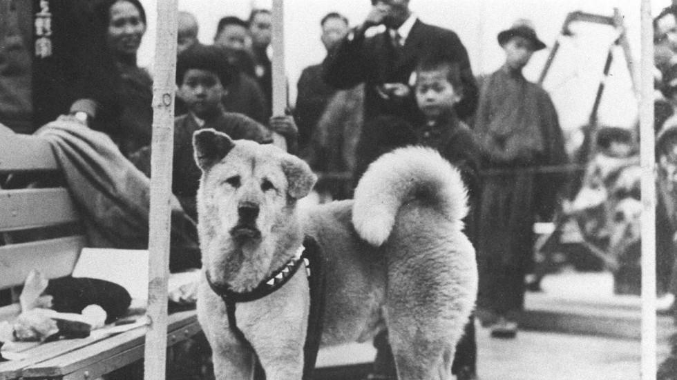 عکس سگ هاچیکو