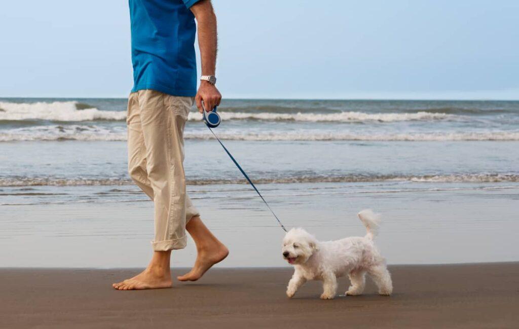 اجتماعی کردن سگ مالتیز