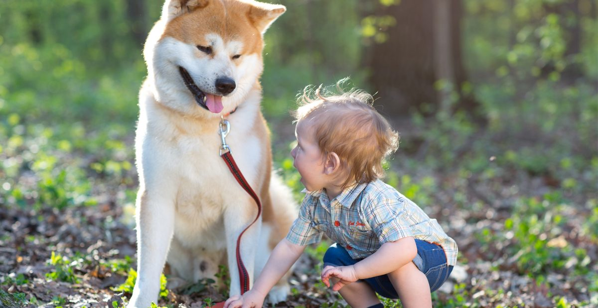 رابطه سگ آکیتا با بچه ها