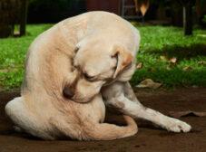 10 بیماری پوستی شایع در سگها + علائم و درمان