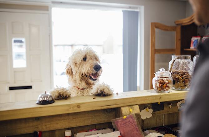 هتل و پانسیون سگ چیه و چه مزایا و معایبی داره؟