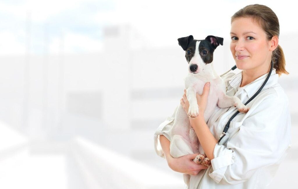 مشکلات پوستی در سگ