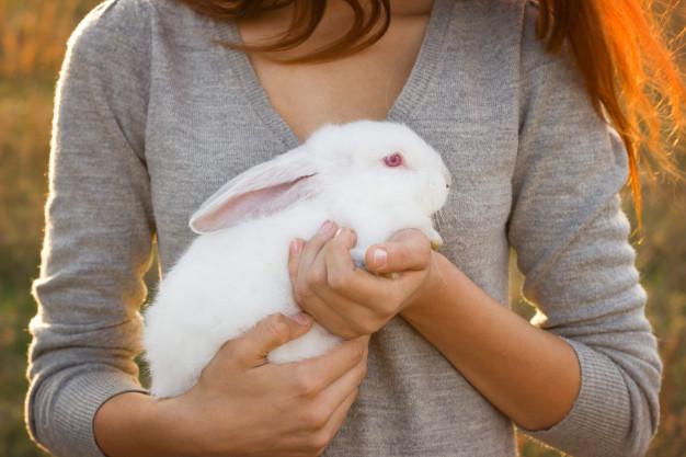 روش بغل کردن خرگوش